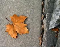 Last Fallen Leaf