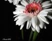 Daisy4847