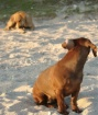 Lola and Doggy