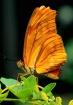 Butterfly #23