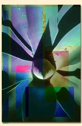 Checkered Aloe - ID: 92814 © Mary B. McGrath