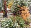 Snow Storm at Yos...