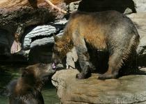Slobbery Bear Kiss