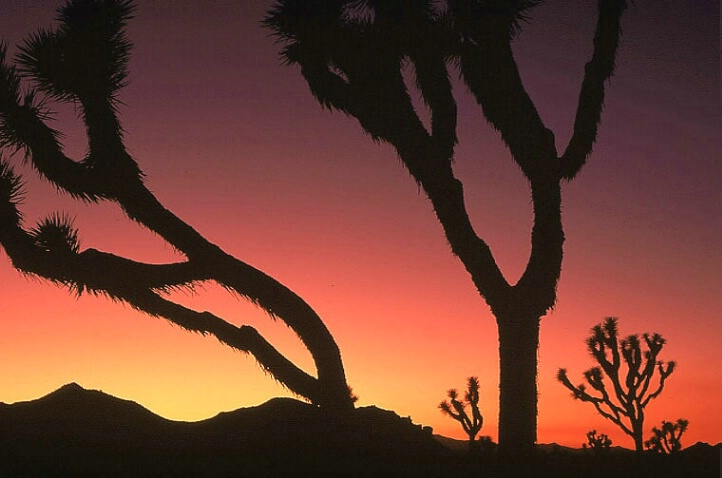 Desert at Dusk
