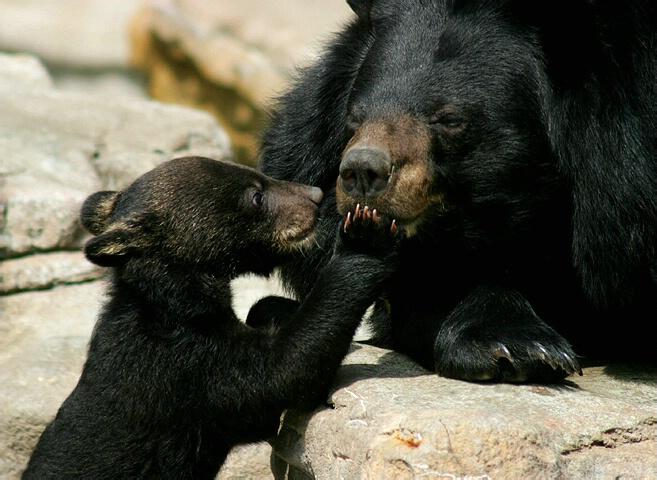 Ssshhh Mommy