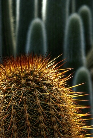 Copper Cacti