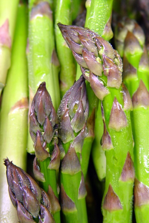 Mother Asparagus
