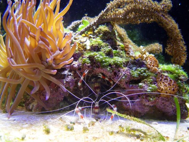 Exotic Shrimp In Hiding...