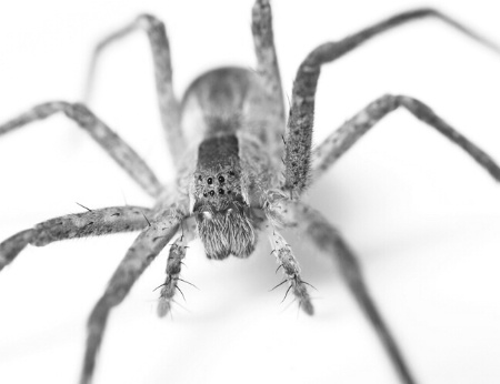 Along Came a Spider...