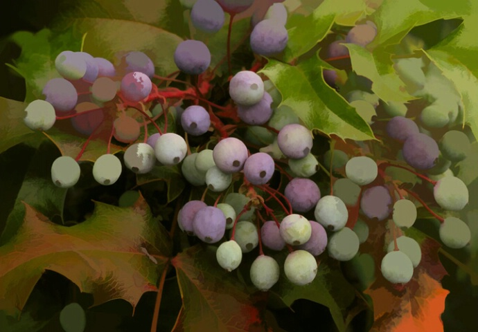 Purple Berries