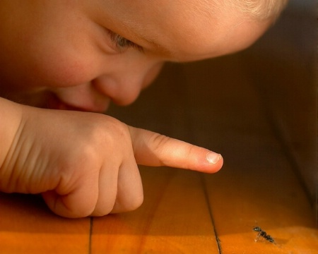 Boy Meets Ant