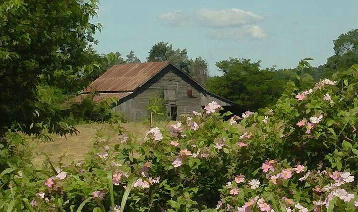 The Barn - ID: 137889 © Carolyn  M. Fletcher