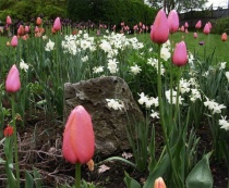 Springtime in Maryland