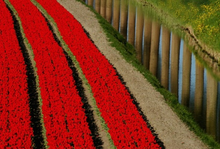 Holland's Lines