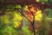 Dreamy Autumn Day