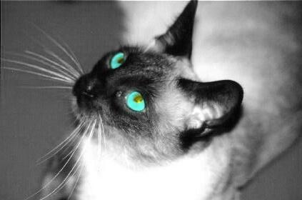 Sparky's Eyes - ID: 170652 © Mary B. McGrath