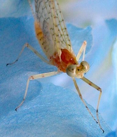 Bug on Blue