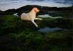 Labrador at Lagoo...