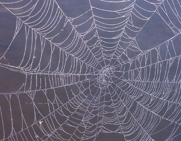 Webs - ID: 183934 © Carolyn  M. Fletcher
