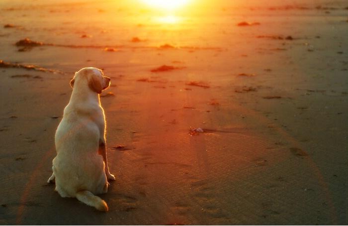 """""""Goodnight, Sun"""""""