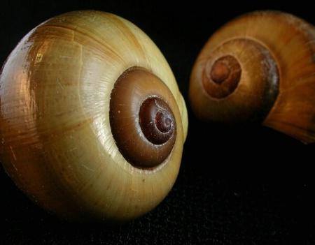 Shells Offset