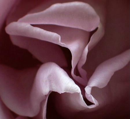 Purfumed  curves