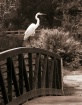 Egret on Railing,...