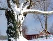 Bright  Winter Da...