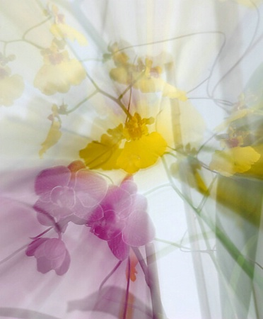 Orchids in Motion