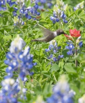 Texan Wildlife