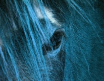 Horse of a Different Color