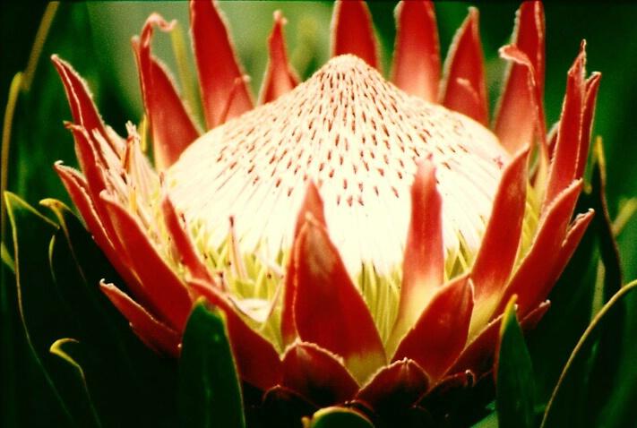 closeup.flower.2 - ID: 352332 © Lamont G. Weide