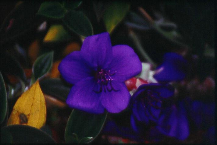 closeup.flower.4 - ID: 352334 © Lamont G. Weide