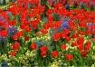 Spring Splendour