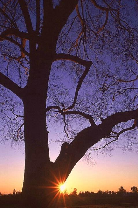 Sunset Sunburst (3)