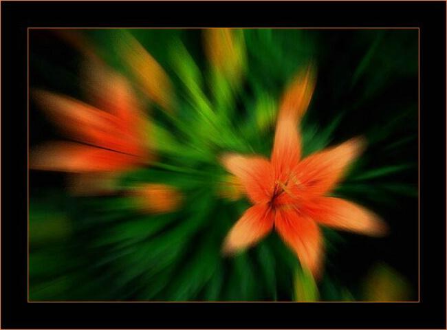 Orange Explosion