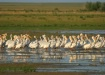 Pelican Heaven