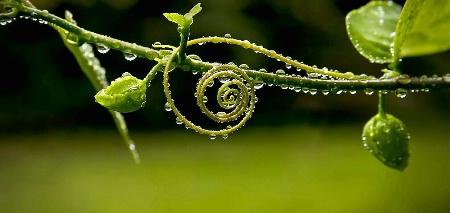 Naturale Spirale
