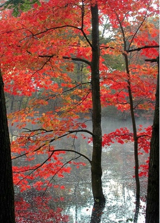 New England Red