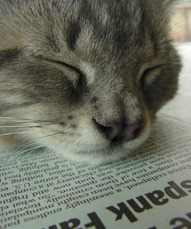 news snooze