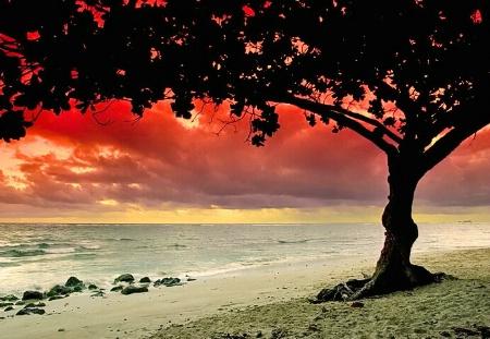 A Canopy At Dawn