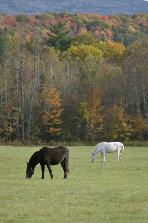 New Hampshire Horses - ID: 581995 © Jim Miotke