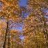 2Country Road - ID: 582007 © Jim Miotke