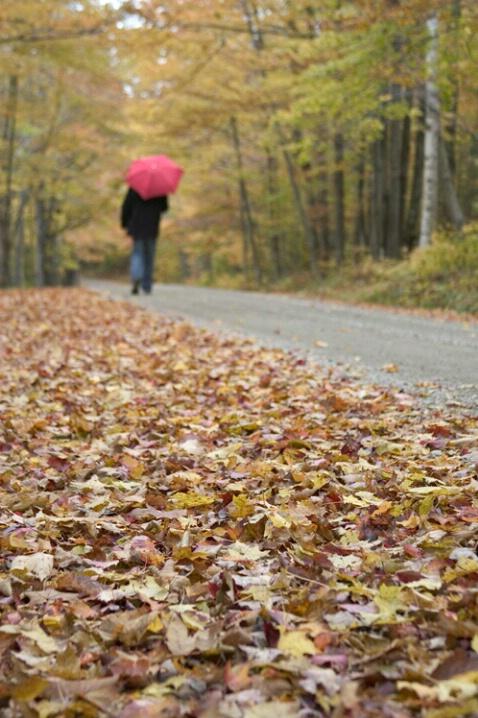Walking Down That Country Road - ID: 582019 © Jim Miotke