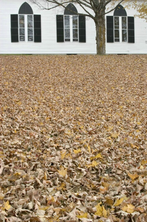 Sea of Leaves - ID: 582020 © Jim Miotke