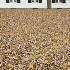 2Sea of Leaves - ID: 582020 © Jim Miotke