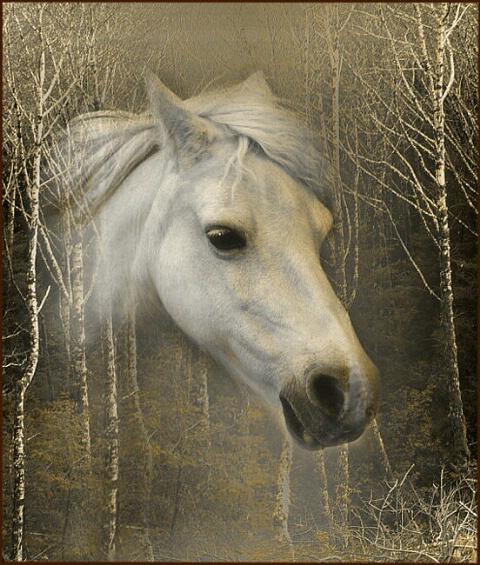 Pony in Alders
