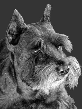 Portrait Of A Puppydog