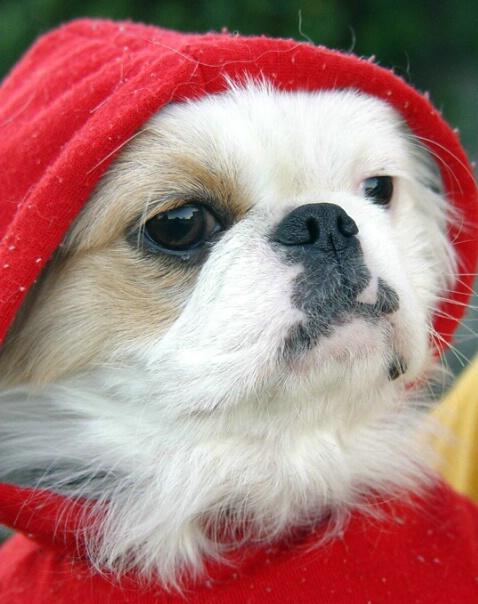 Meet My Great Granddog* - ID: 635904 © Carolyn  M. Fletcher