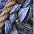 © Kristina Morgan PhotoID# 645136: AN-001 Maine Mussels